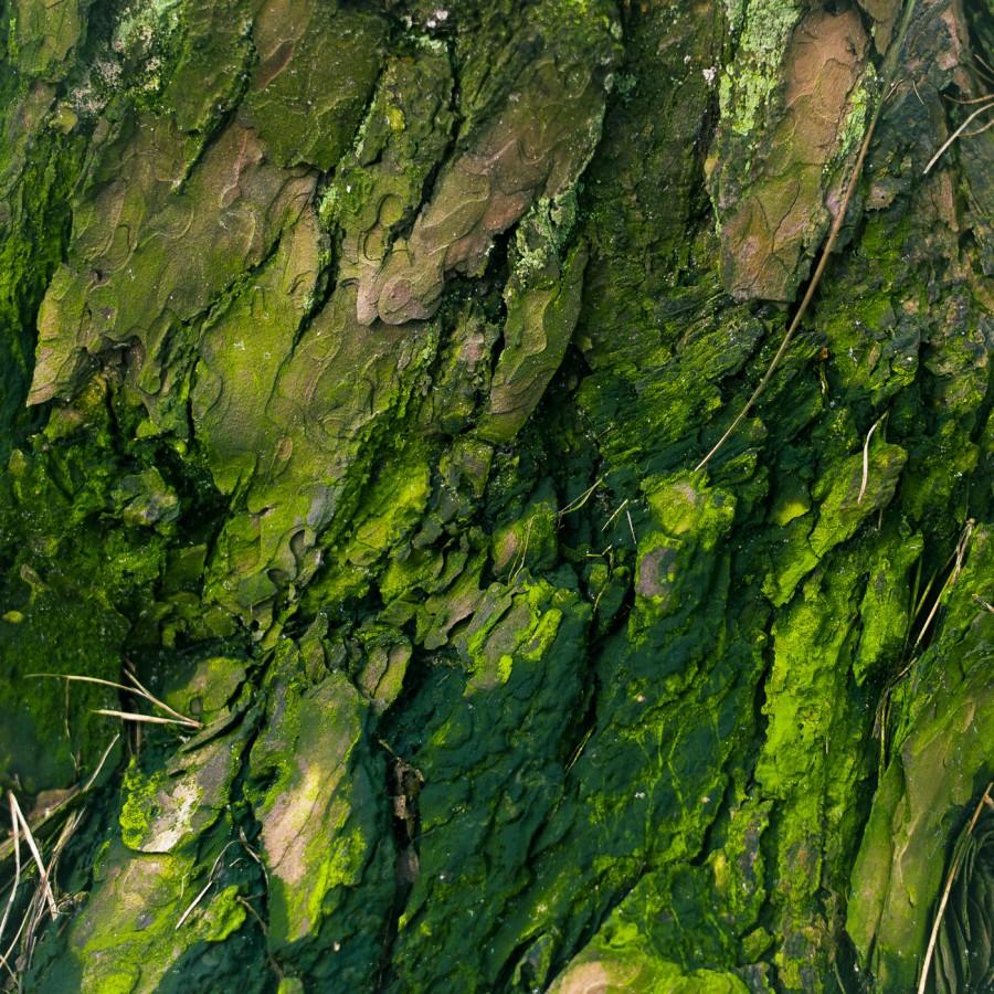 Strukturen Bäume #2
