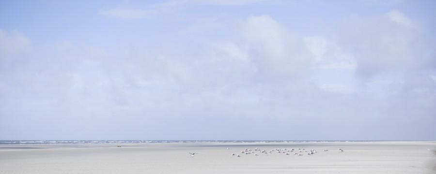 White Beach Möwen #1